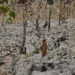 Promover los Medios de Vida para contrarrestar la Sequía